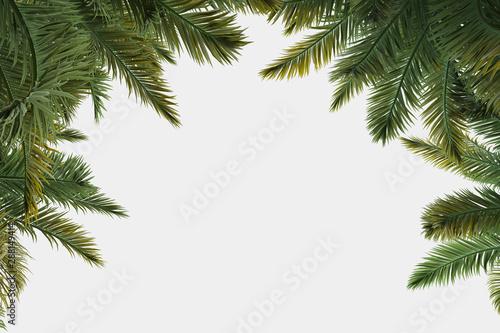 Fotografía  Palm trees isolated