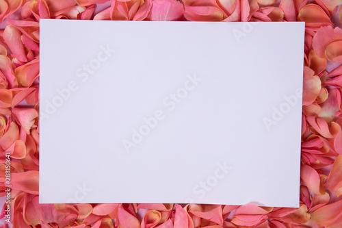White sheet on pink rose petals