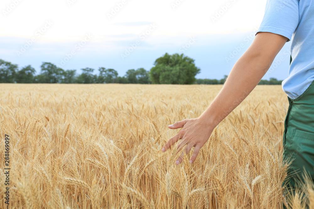 Fototapety, obrazy: Male farmer in wheat field