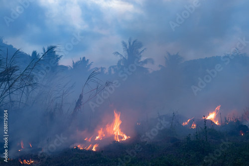 Photo  Forest fire at night
