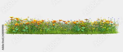 Obraz na plátně  Background illustration of green field of grass with flowers