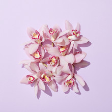 Creative Greeting Card With Gentle Pink Orchids Flowers On A Pastel Pink Background With Shadows.