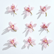Collection Set Of Beautiful Pink Orchid Flower On White Background. Floral Pattern With Shadows.