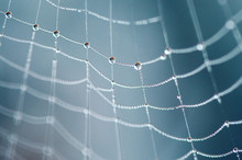 Macro Of A Spider Web With Dro...