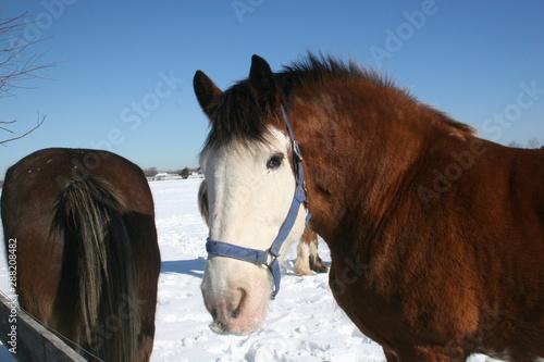 , horses