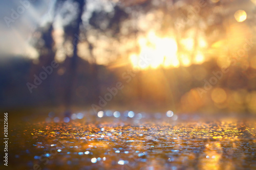 Abstract background of light burst among trees and glitter golden bokeh lights - 288221666