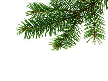 Fir Tree Branch. Pine Branch. Christmas Background.