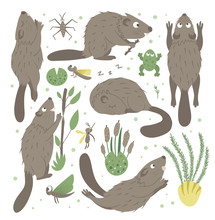 Vector Set Of Cartoon Style Flat Funny Beaver In Different Poses With Frog, Reeds, Water Insects Clip Art. Cute Illustration Of Woodland Animals For Children's Design. .