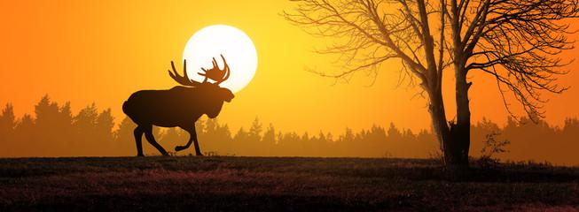 Moose in wild nature landsc...