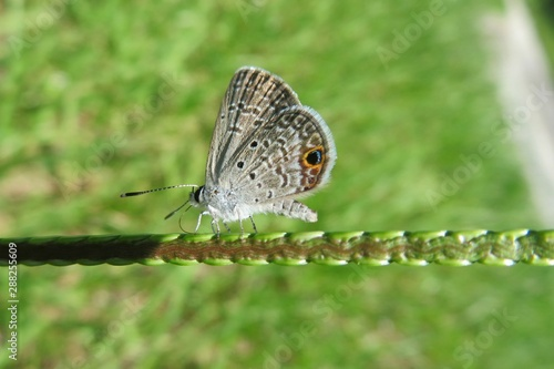 Beautiful butterfly on green plant