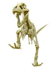 Tyrannosaur Skeleton Running