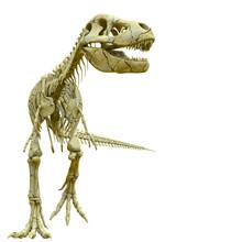Tyrannosaur Skeleton Walking P...