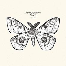 Aglia Japonica Moth, Hand Draw Sketch Vector.