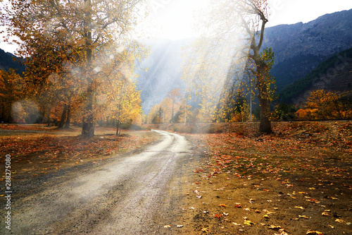 Poster Autumn Landscape image of dirt countryside dirt road with colorful autumn leaves and trees in forest of Mersin, Turkey