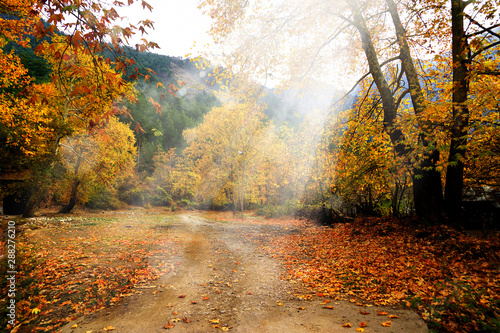 Foto auf AluDibond Herbst Landscape image of dirt countryside dirt road with colorful autumn leaves and trees in forest of Mersin, Turkey