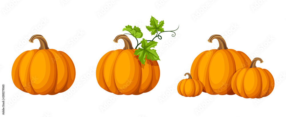 Obraz Vector set of orange pumpkins isolated on a white background. fototapeta, plakat