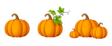 Vector Set Of Orange Pumpkins Isolated On A White Background.