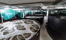 Inside A Shrimp Farm. Pond Shrimp Closed System.