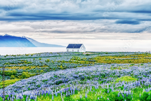 Fotografija  Classical Icelandic view of northern part of island