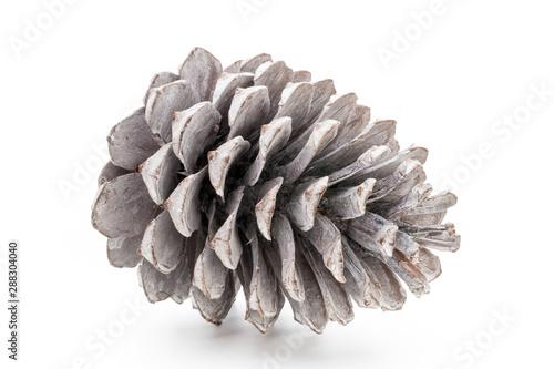 Fotografie, Obraz  Christmas pine cone on white background.