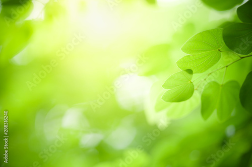 fototapeta na drzwi i meble Closeup nature view of green leaf on blurred greenery background in garden with copy space using as background natural green plants landscape, ecology, fresh wallpaper concept.