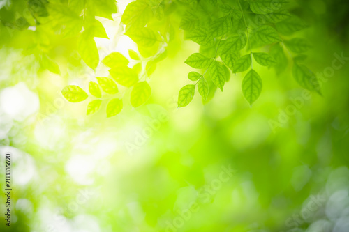 Foto auf AluDibond Gelb Closeup nature view of green leaf on blurred greenery background in garden with copy space using as background natural green plants landscape, ecology, fresh wallpaper concept.
