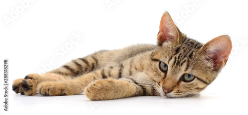Photo sur Toile Les Textures Small brown kitten.