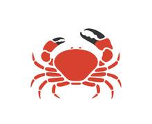 Tasmanian Giant Crab. Isolated Crab On White Background