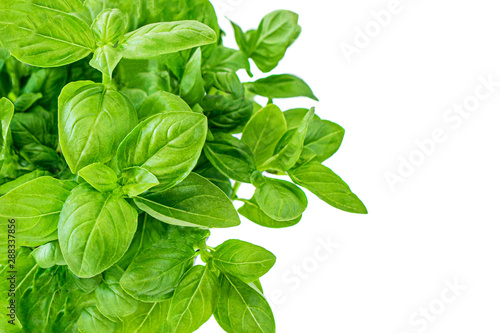Fotografía  Fresh basil plant with green leaves in a pot