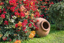 Large Clay Pot On The Lawn And Vines Of Boganvillia At The Largo Museum