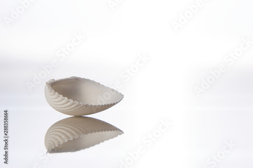 Seashell and reflection in glass on a white background Tapéta, Fotótapéta