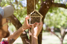 Man Hanging Insect Hotel On Th...