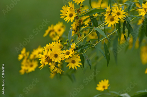 Isolated Yellow Flowers