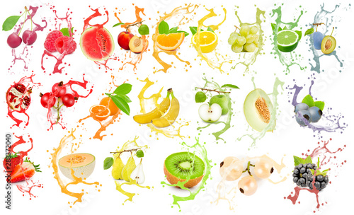 Fruit Splash Collection - 288372040