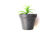 Potted plastic plants and flowers for decorations. Container made of aluminium, plastic, ceramic as well as clay. Plants include Cactus, cacti, beautiful green leaves and red flowers.
