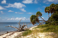 Photo Of A Beach At Seahorse Key Florida On The Gulf Of Mexico