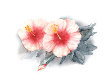 Rose Of Sharon. Two Flowers Of...