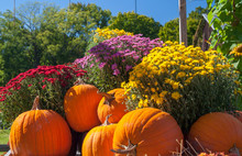 Wagon Full Of Pumpkins And Fal...