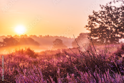 Foto auf Gartenposter Ziegel Westruper Heide Nebel Sonnenaufgang