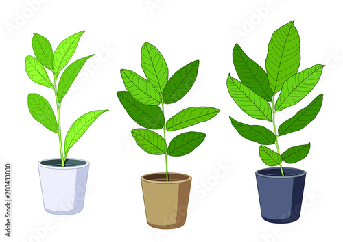 Fotografia, Obraz  air purification green leaves trees in pots fresh on white background illustrati