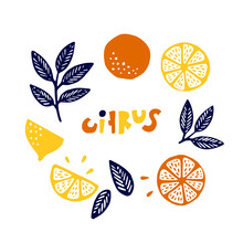 Collection Of Citrus Fruits - Orange, Lemon, Lime And Leaves Icons Set, Colorful Isolated On White Background, Vector Illustration. Citrus Cute Lettering