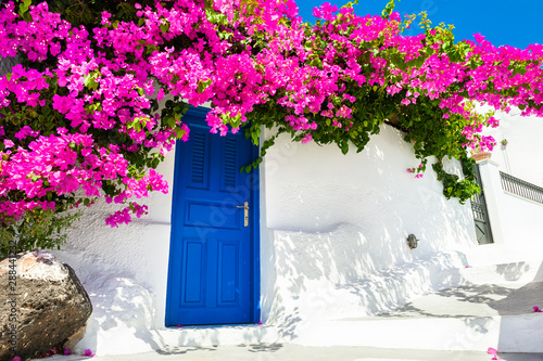 Obraz White cycladic architecture with blue door and pink flowers of Bougainvillea on Santorini island, Greece. - fototapety do salonu