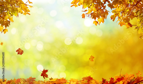 Photo sur Aluminium Arbre Beautiful autumn landscape with yellow trees and sun. Colorful foliage in the park. Falling leaves natural background
