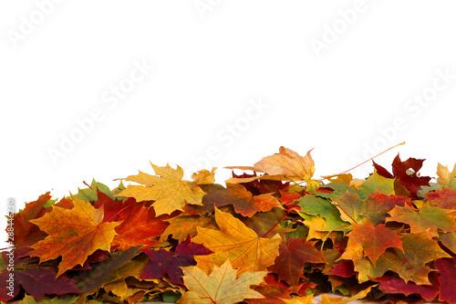 Cuadros en Lienzo  Pile of autumn colored leaves isolated on white background