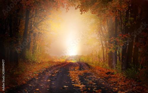 Fototapeta  Fantasy background . Magic forest.Beautiful autumn landscape.