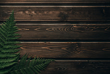 Fern Lies On Dark Wooden Backg...