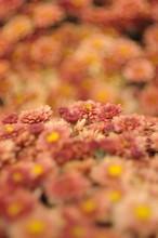 Strip Of Sharp Flowers Of Oran...