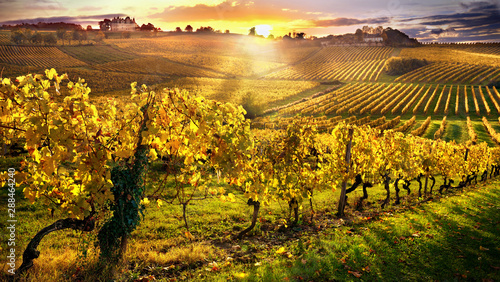 Wall Murals Vineyard vineyards bergerac france