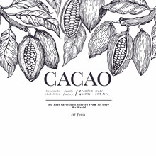 Cocoa Banner Template. Chocolate Cocoa Beans Background. Vector Hand Drawn Illustration. Vintage Style Illustration.