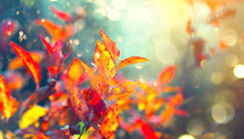 Autumn Colorful Bright Leaves Swinging In A Tree In Autumnal Park. Fall Colorful Background. Beautiful Nature Scene